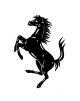 Stallion's picture